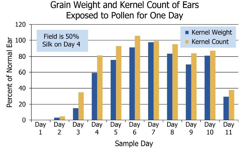 Grain Counts